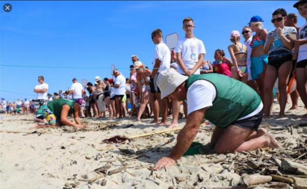 Polonya'da her sene düzenlenen geleneksel kehribar avlama yarışması